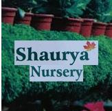 Nursery in Bharat Vihar, Rishikesh, Dehradun, Uttarakhand, India